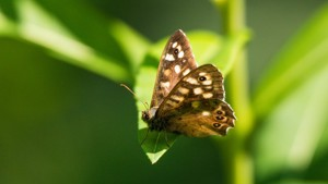 Butterfly Survey Training - 06/03/2021 - 10:30-11:30