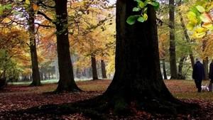 Which is the oldest tree in Warley Woods?